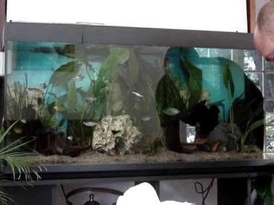 Décoration plantation aquarium d'eau douce