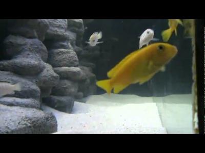 Aquarium malawi 450 litres décor diy