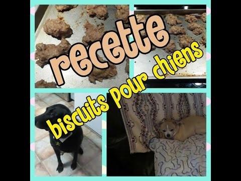 Recette de Biscuit pour chien (D.I.Y)