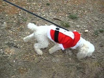 Costume du père Noel déguisement de petit papa Noel pour chien saintepromos mode canine