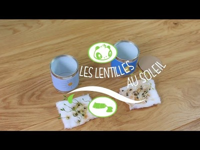 The Daily Craft : les lentilles au soleil