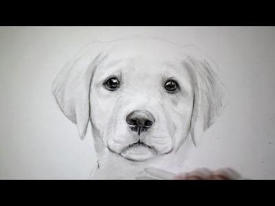 Comment dessiner un chien [Tutoriel]