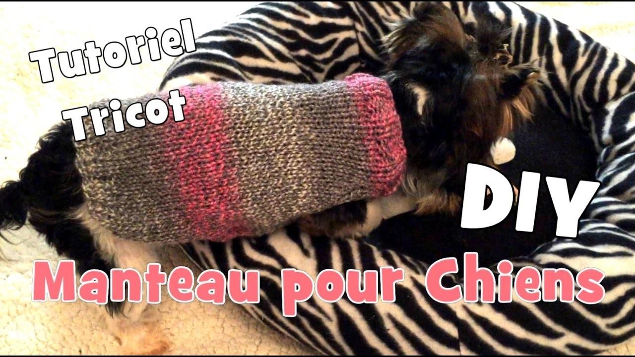 diy tutoriel tricot manteau pour chiens chihuahuas yorkshires. Black Bedroom Furniture Sets. Home Design Ideas