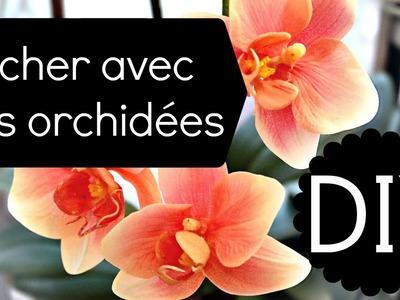 DIY - Votre orchidée a perdu ses fleurs ? Astuce pour la refleurir | Tutoriel fleurs