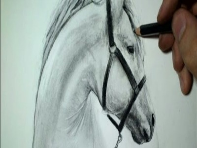 Tuto 1 : dessin tête de cheval