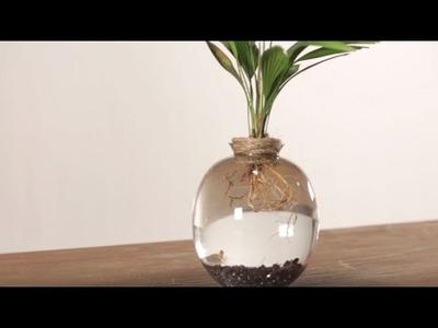 Comment créer un jardin aquatique ? #DIY