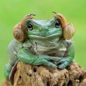 ptite grenouille